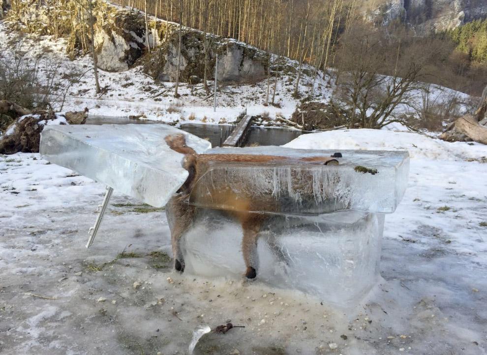 Лиса во льду на юге Германии