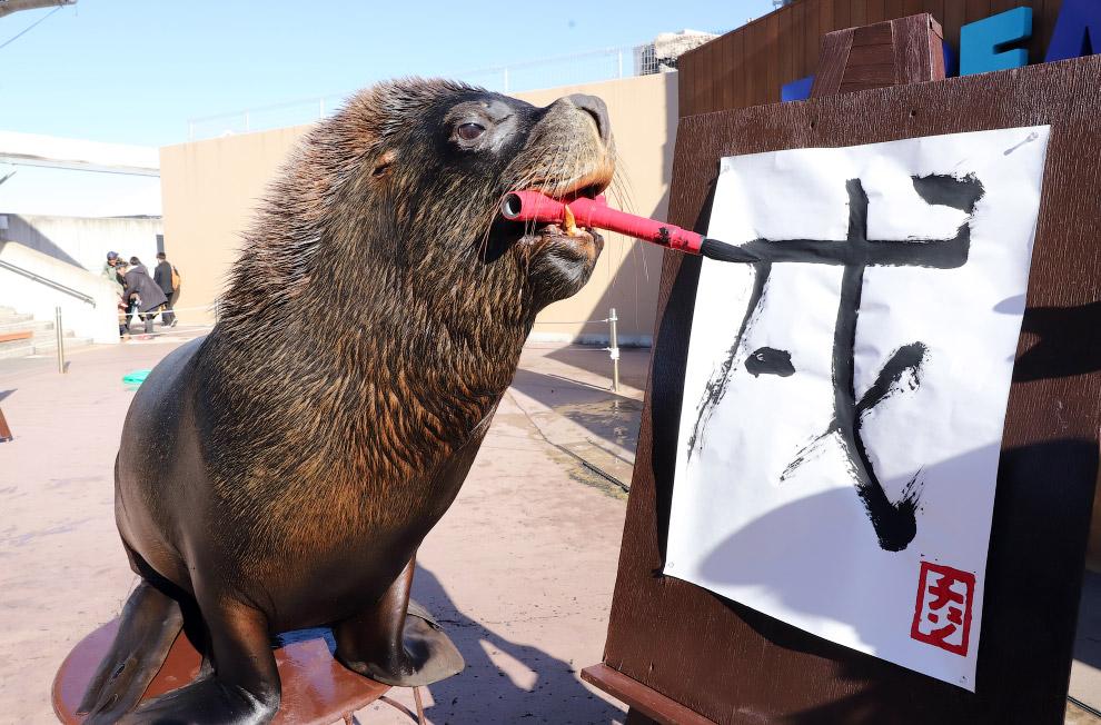 14-летний морской лев пишет слово «собака» в иероглифах