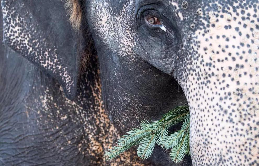 Слон в зоопарке в Штутгарте