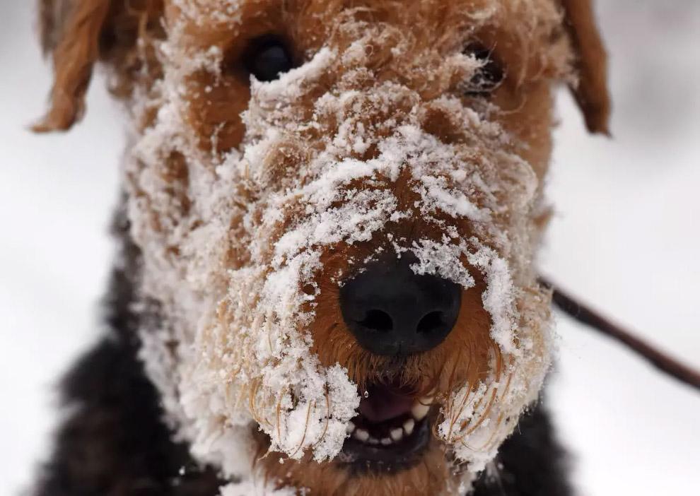 Довольная собачка после снегопада на юго-западе Германии