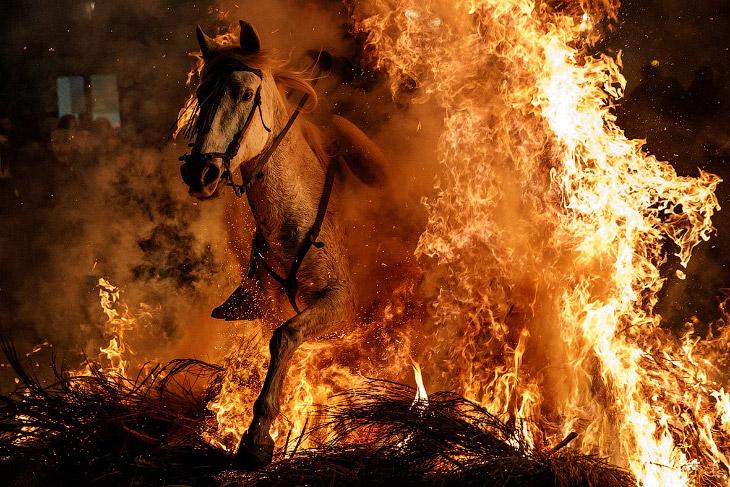 Огонь и лошади: День святого Антонио 2018