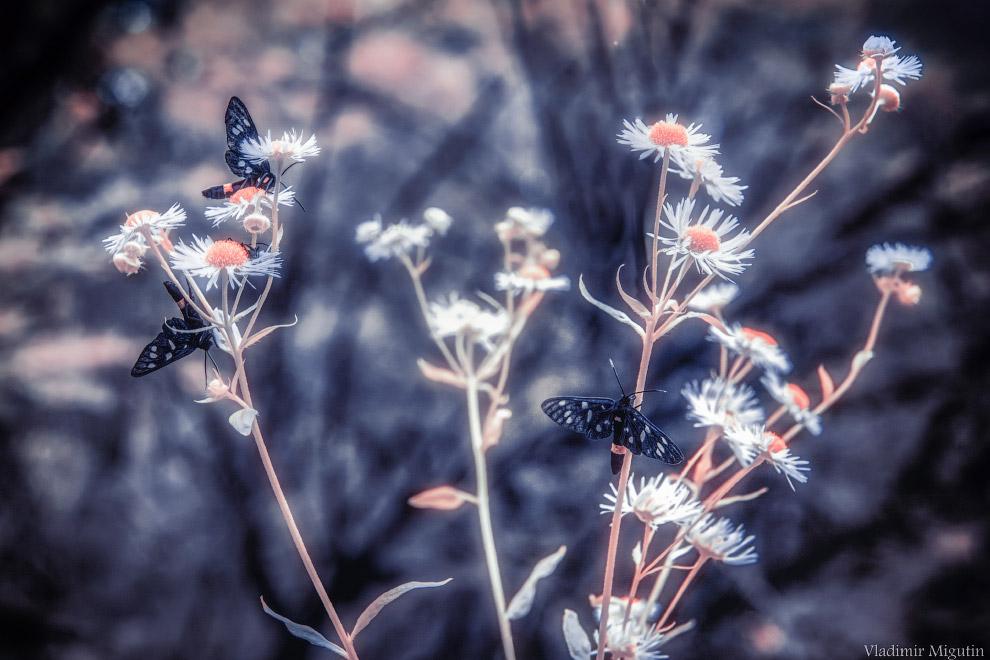 Бабочки и цветы в лесу