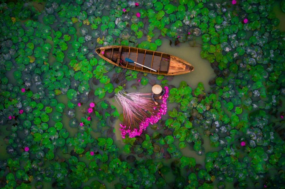 Женщина собирает лилии в пруду в дельте Меконга во Вьетнаме