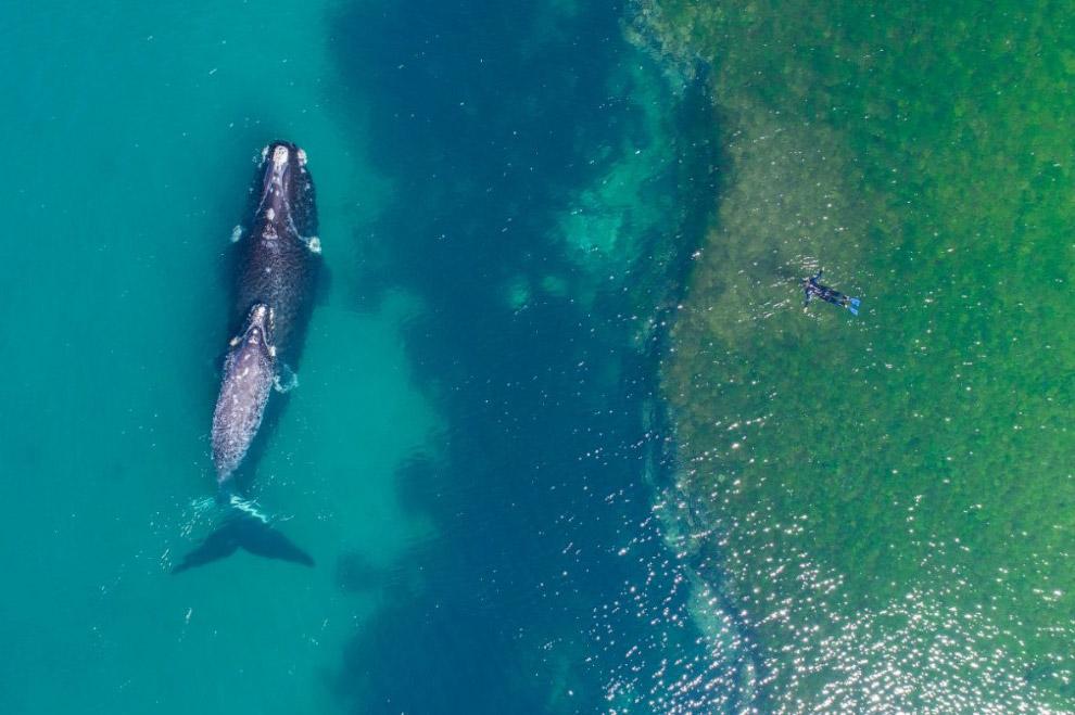 Купання з китом, півострів Вальдес, Аргентина