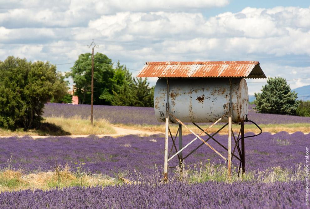 Поля лаванды в Провансе