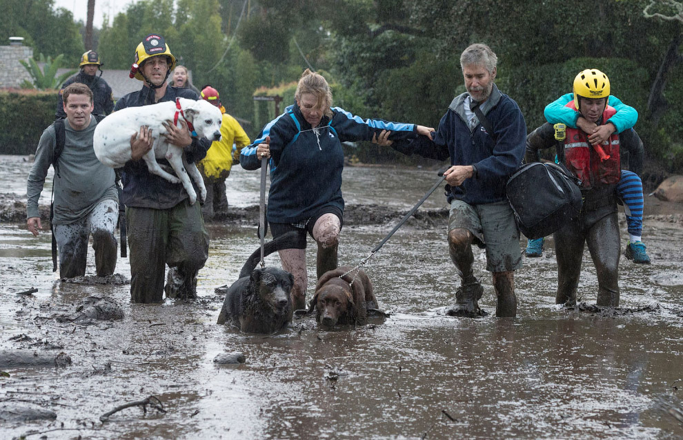 Эвакуация местных жителей и их собак в Монтесито, Калифорния