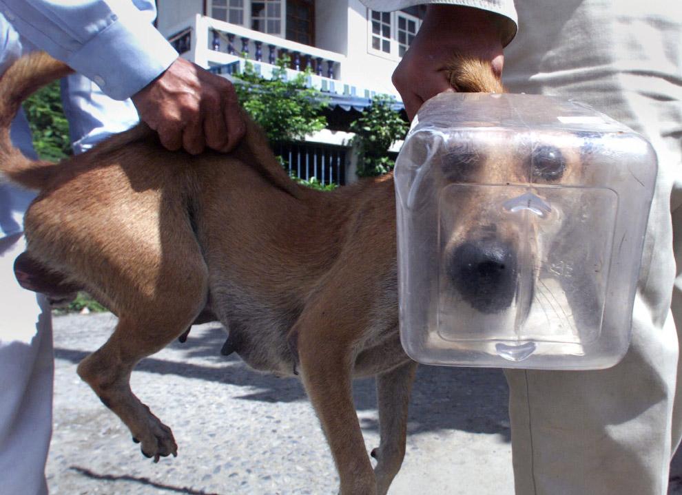 Любопытный пес залез головой в пластиковый контейнер в Бангкоке, Таиланд
