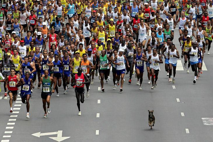 Четвероногий марафонец всех обогнал в Сан-Паулу, Бразилия