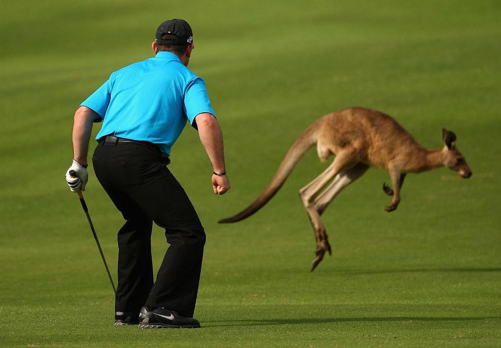 Любитель гольфа из Австралии