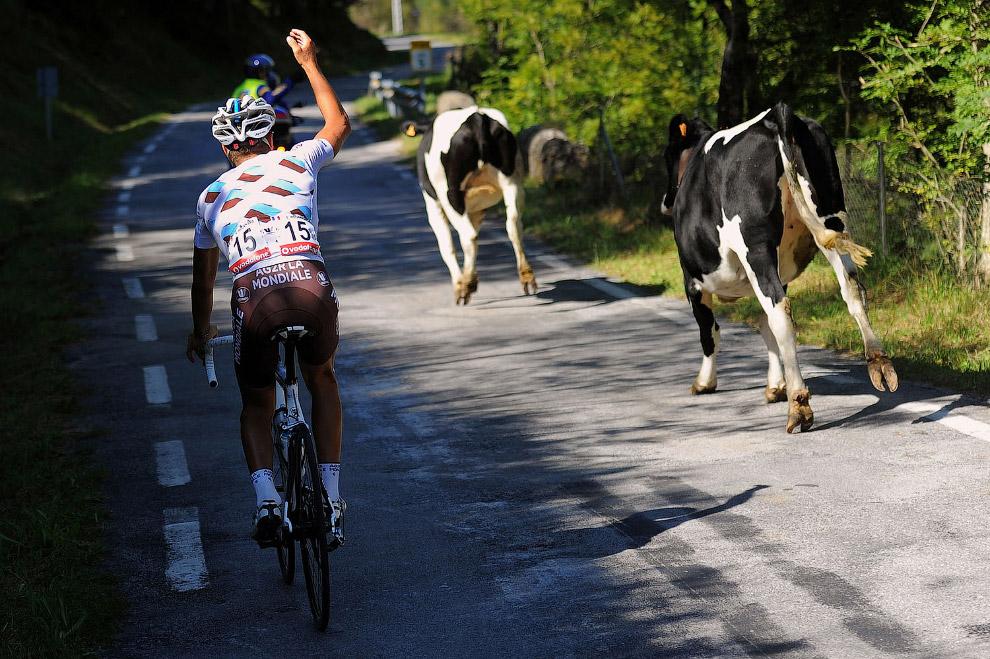 Группа поддержки велосипедистов во время шоссейной многодневной велогонки в Испании