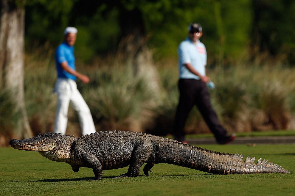 Еще один любитель игры для гольфа из Луизианы
