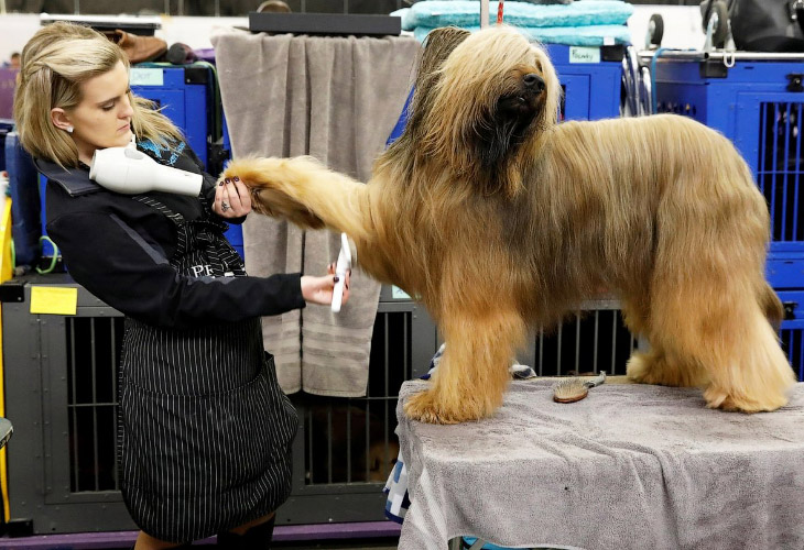 Выставка собак Westminster Kennel Club 2018