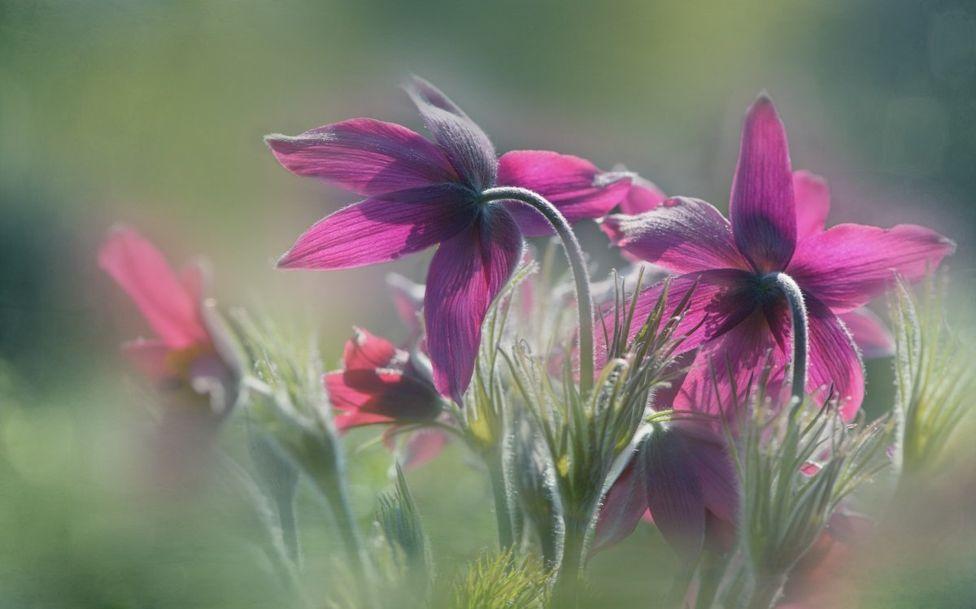 Цветы в Королевских ботанических садах Кью, Лондон
