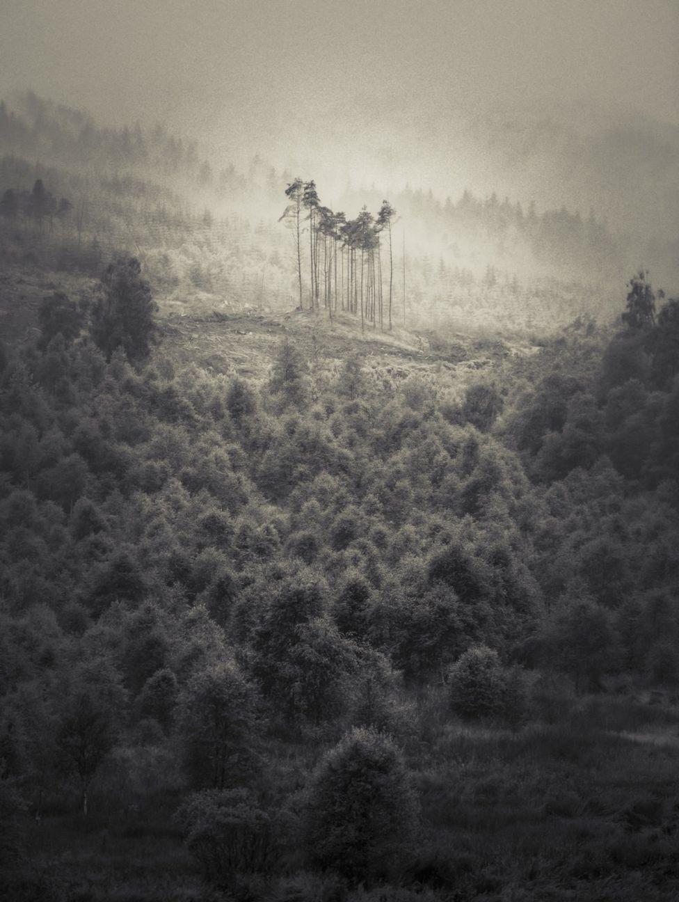 Сосны в горах Шотландии