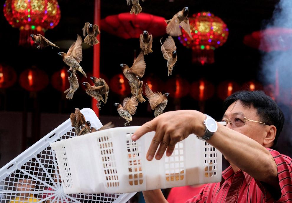 Выпускаем птиц на удачу в китайском квартале в Джакарте, Индонезия