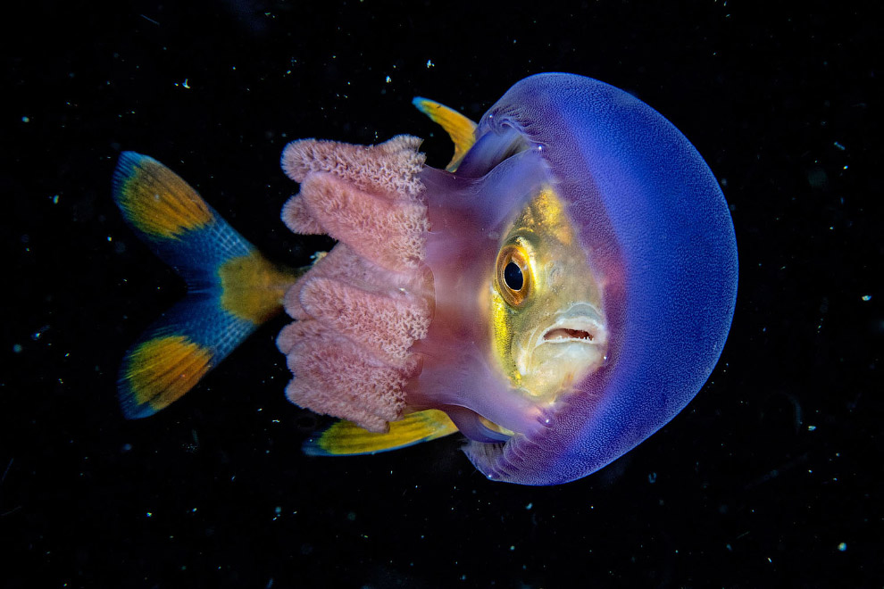 Подводный мир на Филиппинах