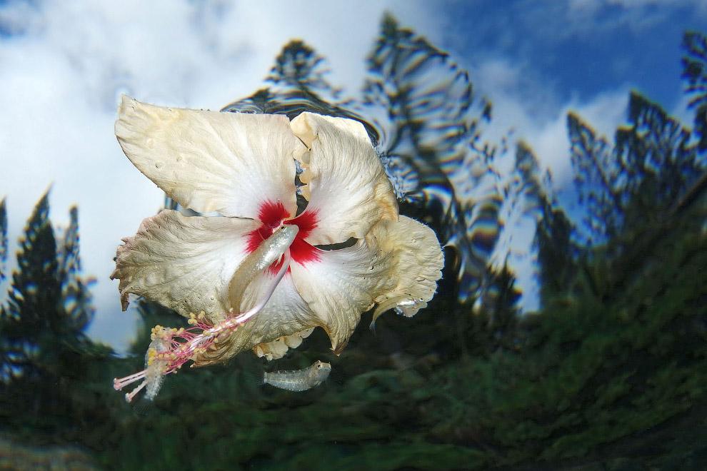 Цветок и рыбка, Новая Каледония
