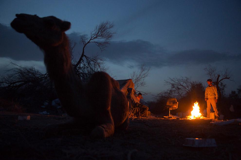 Костер, верблюд, палатка