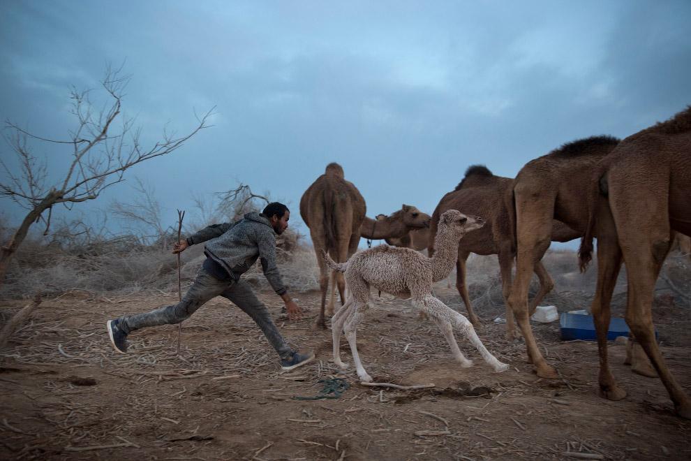 Бедуины Мёртвого моря