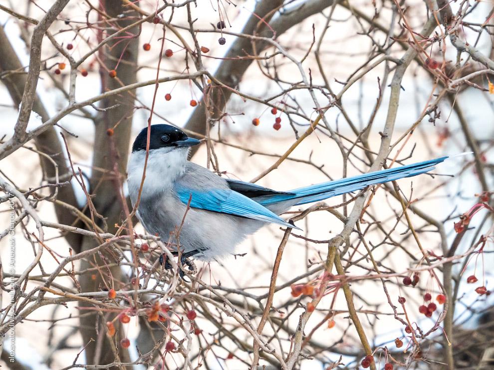 Птица счастья