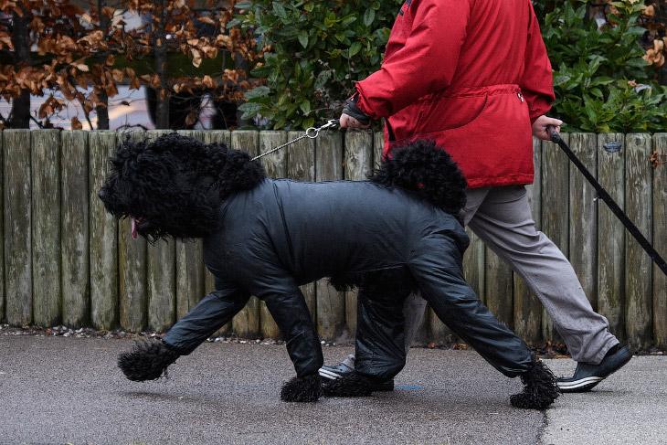 Выставка собак Crufts Dog Show 2018