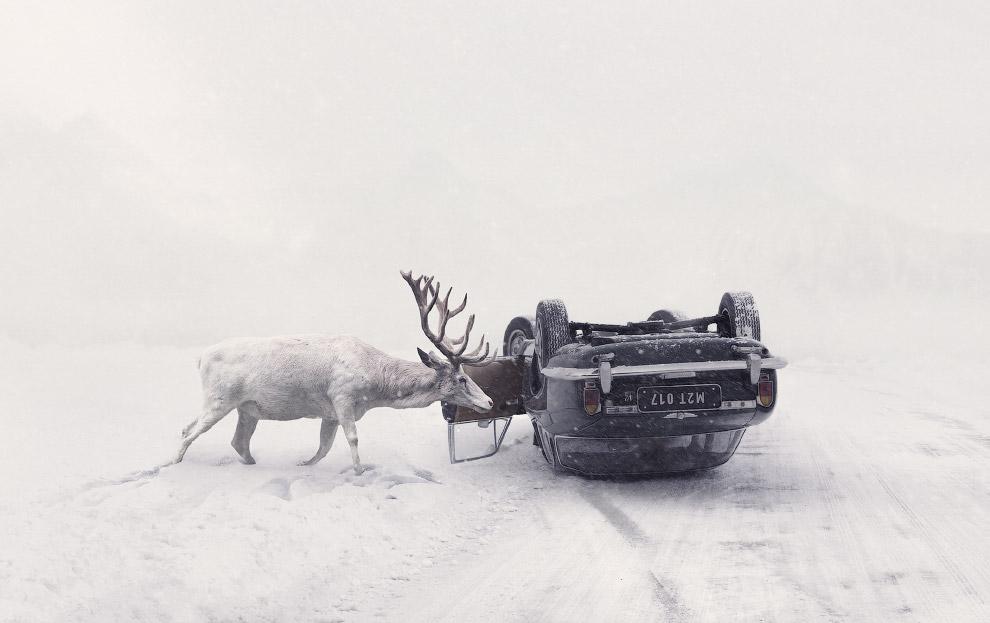Национальная премия Чехии. Олень и автомобиль