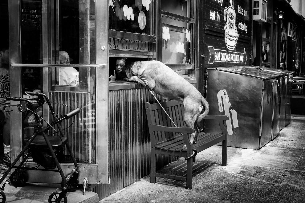 Собака у вікні кафе в Нижньому Манхеттені