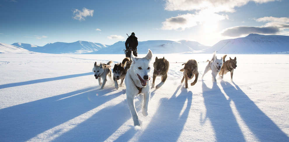 Собача упряжка, Свальбард, Норвегія