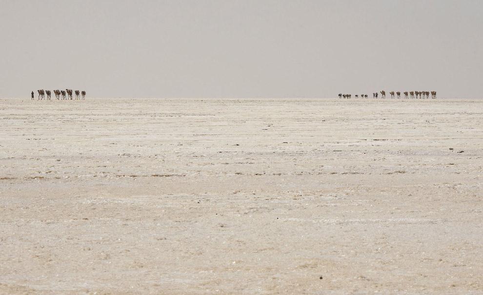 Караван верблюдов с солью