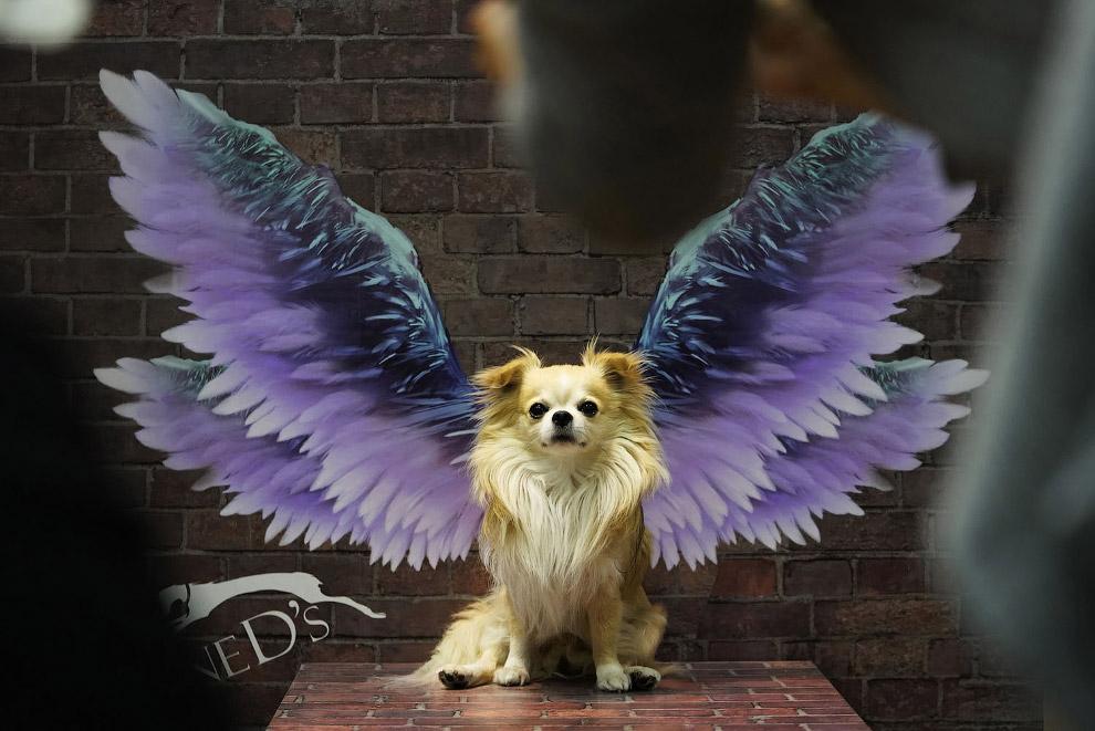 Крылатая собака из Токио