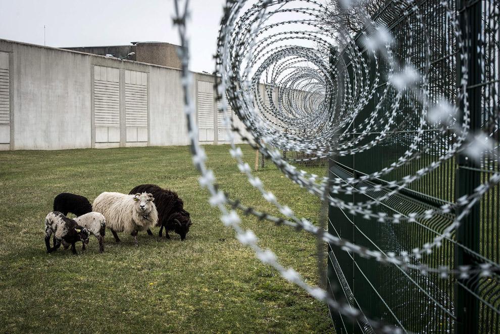 Охранники в тюрьме Сен-Квентин-Фалавьер, Франция