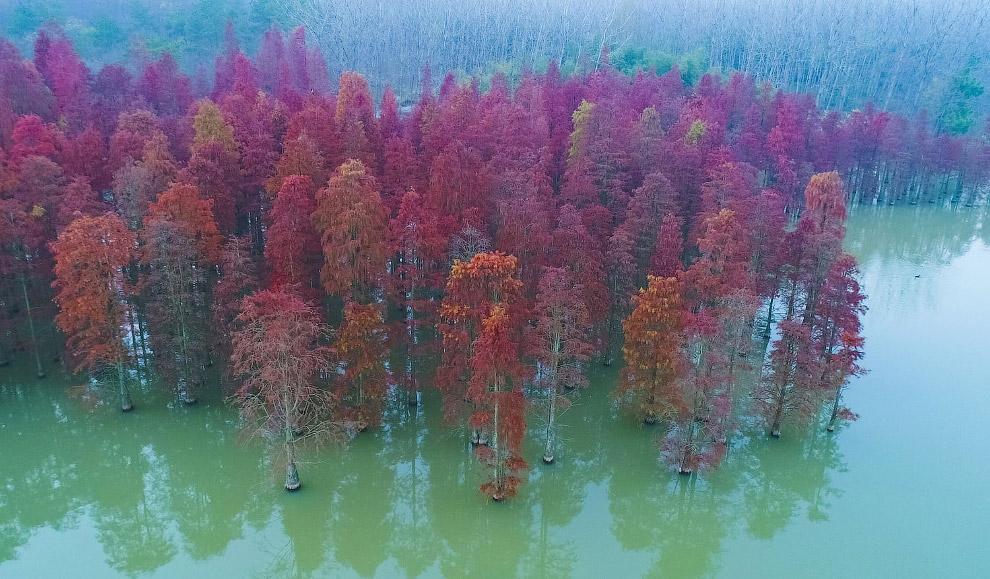 Осенние деревья в небольшом озере вблизи Нанкина, Китай