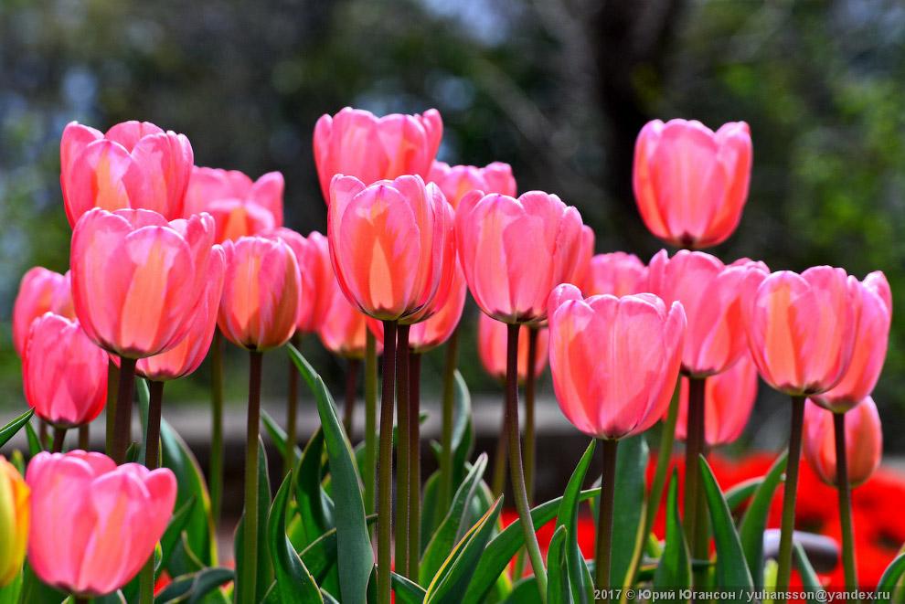 Цветы в Крыму