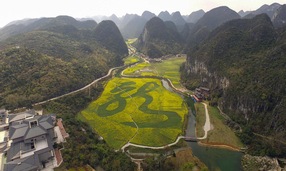 Дракон на рапсовом поле площадью 80 000 квадратных метров в Аньшуне, Гуйчжоу, Китай