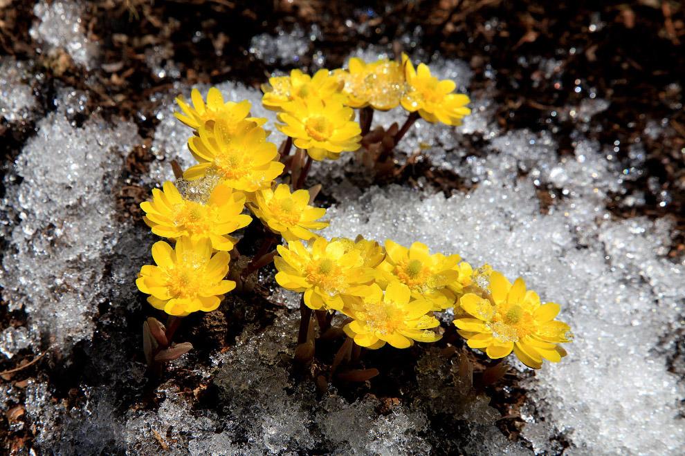 Весна в округе Ичун, Хэйлунцзян, Китай, 31 марта 2018