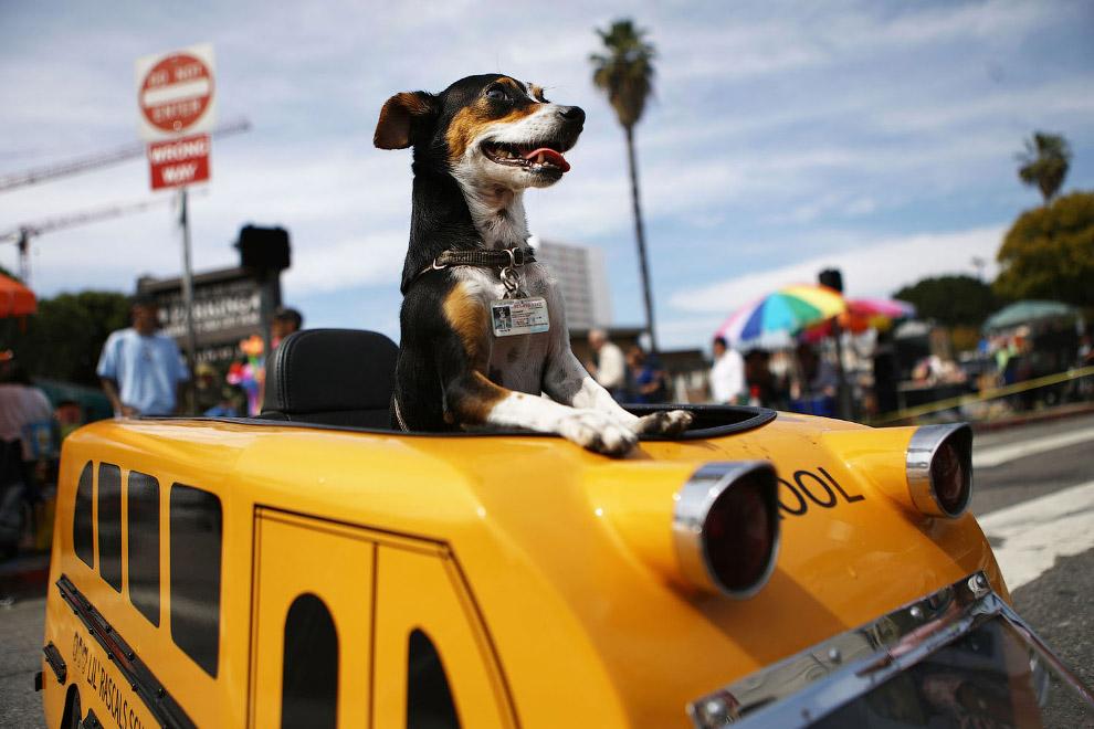 Ежегодная церемония «Благословение животных» в Лос-Анджелесе
