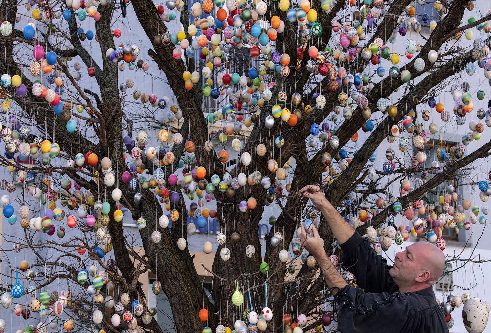 10 000 расписных яиц на дереве в городе Заальфельде, Германия
