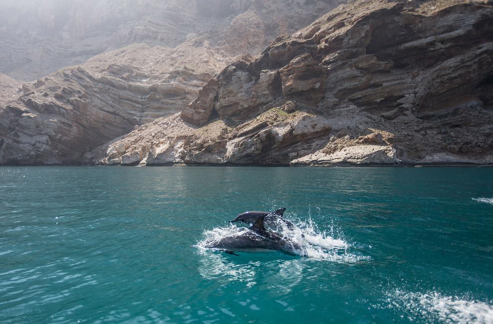 Сокотра в индийским океане