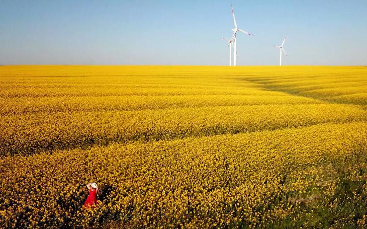 Рапсовое поле и ветряки в Турции