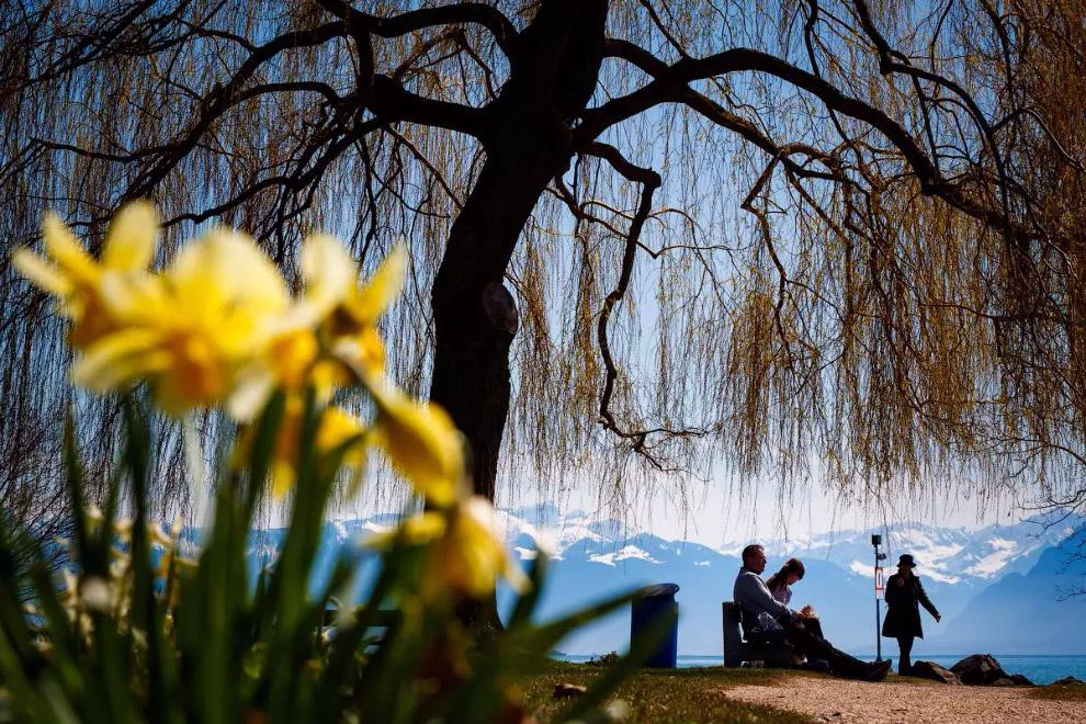 Прийшла весна на берег Женевського озера в Швейцарії