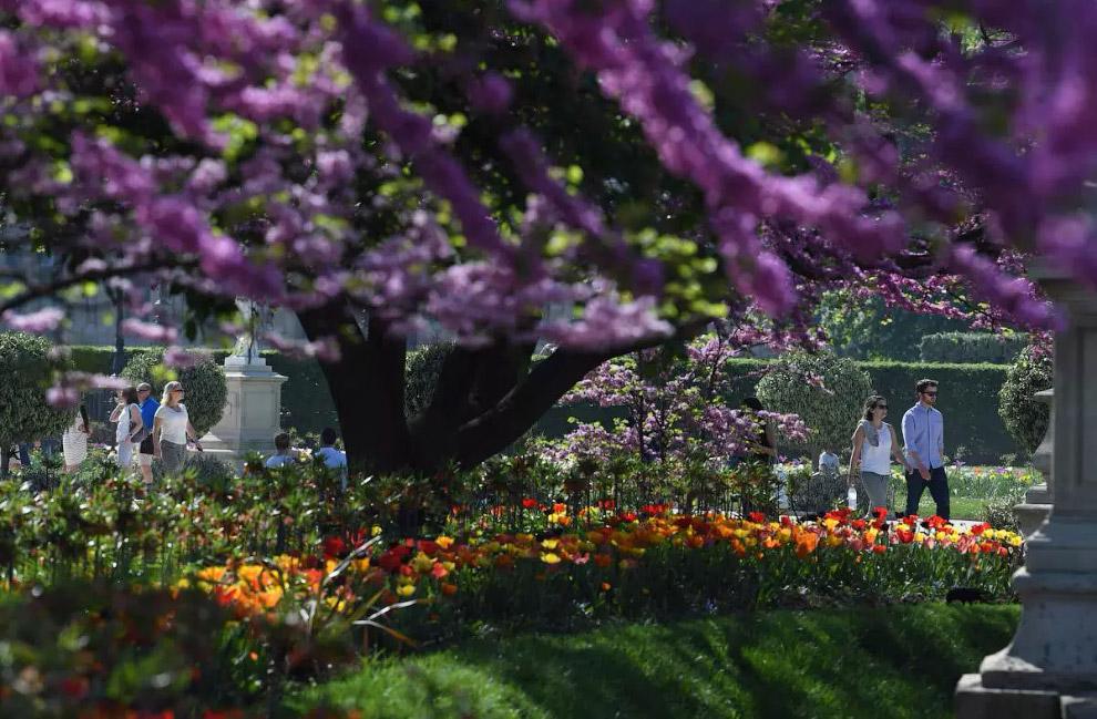 Весняний день в саду Тюїльрі в Парижі