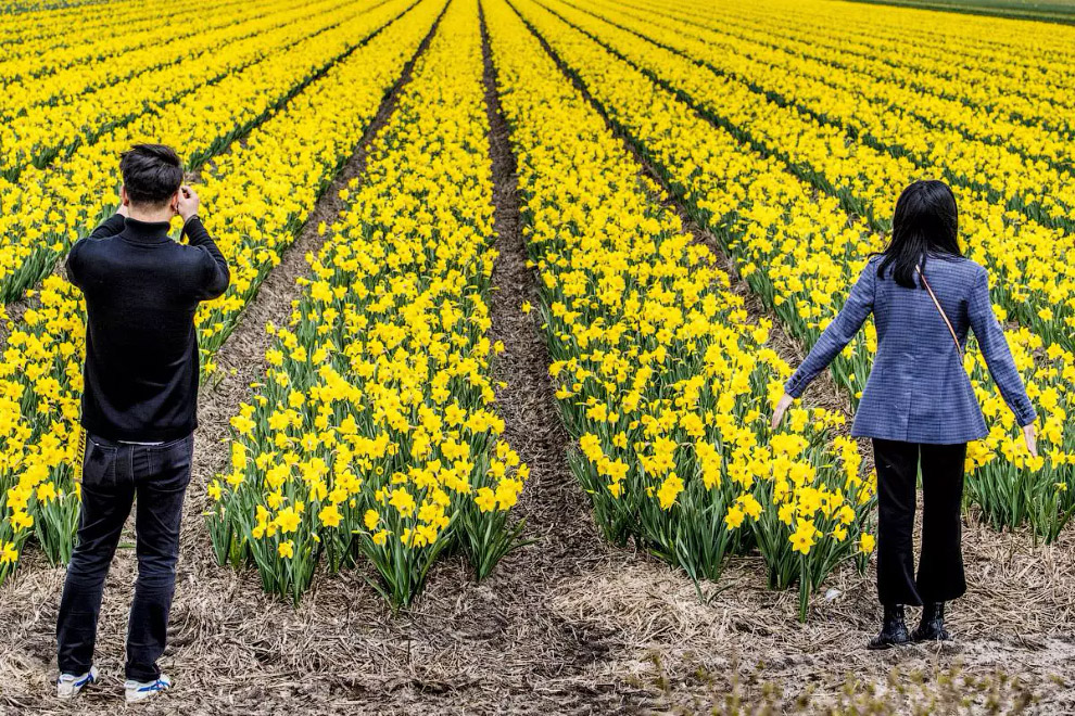 Прийшла весна в Нідерланди