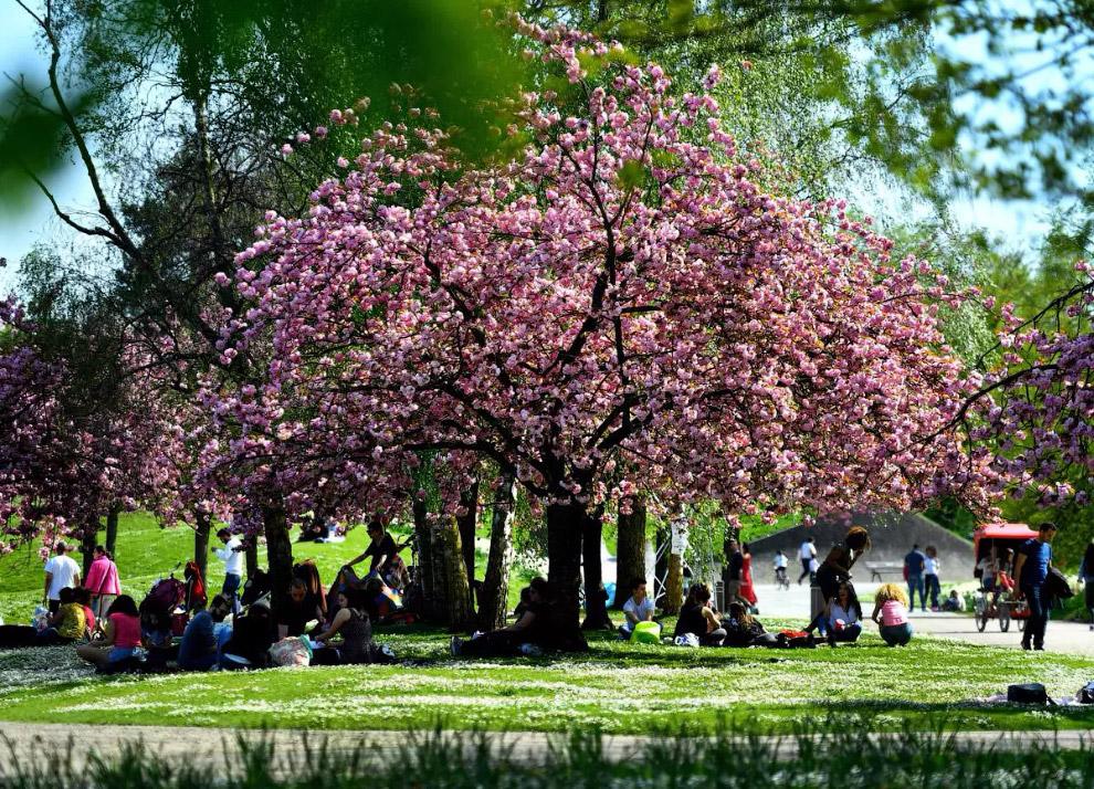 Парк Флораль - частина ботанічного саду Парижа