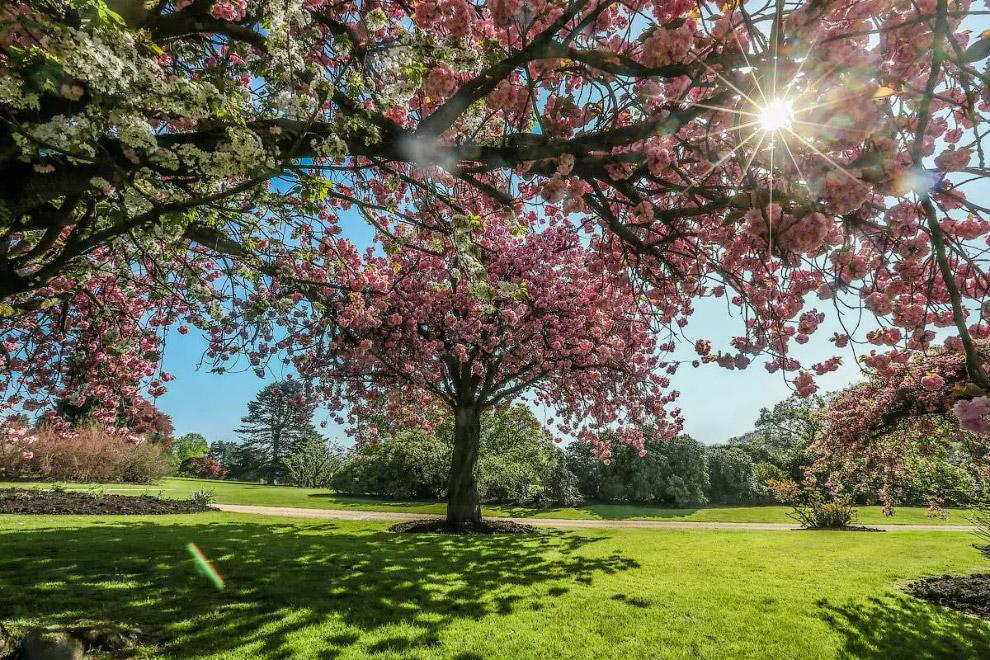 Прийшла весна в парк Лекен в Брюсселі, Бельгія