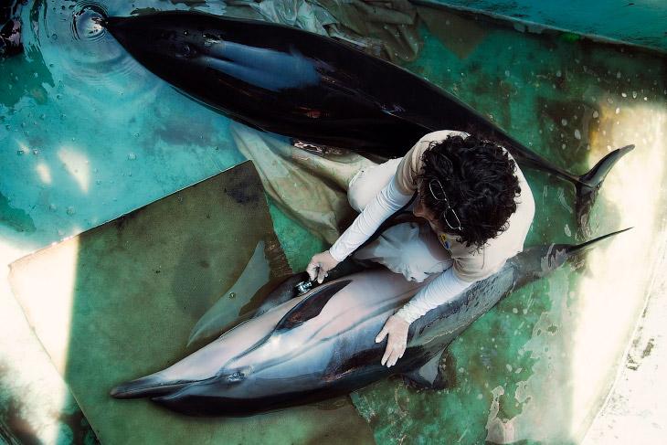 Обследование дельфина в зооцентре в Сан-Диего, Сальвадор