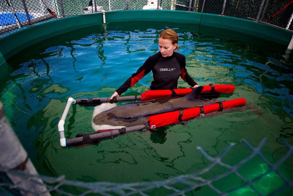 Центр для млекопитающих в Ванкувере, Британская Колумбия