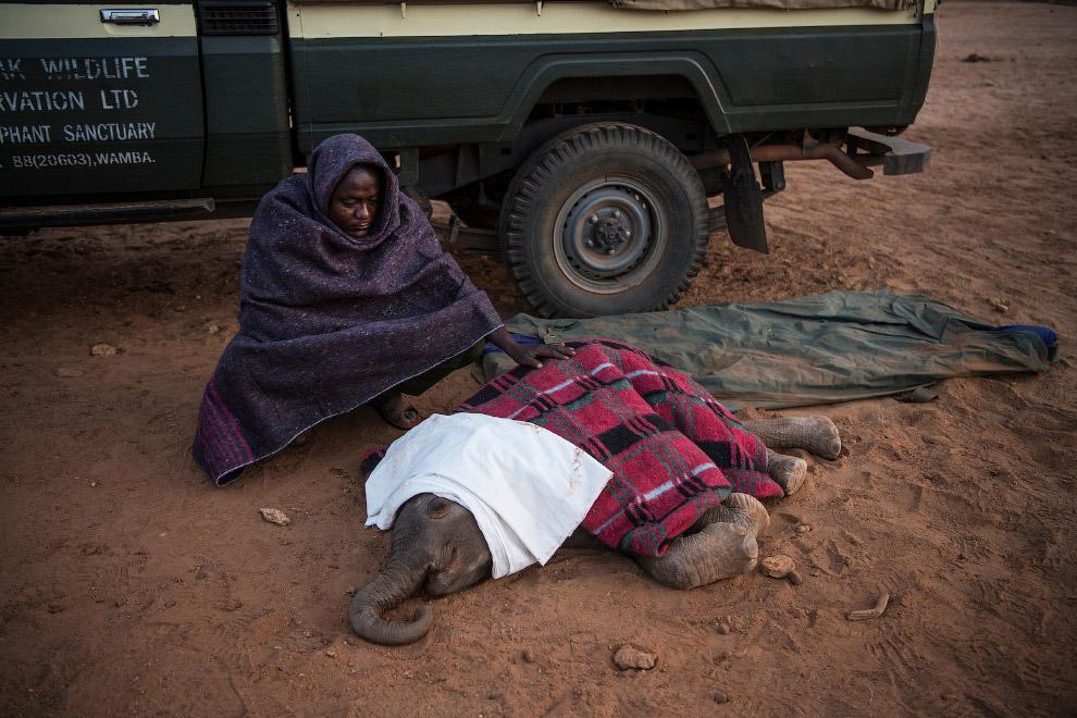 Репортаж о судьбе новорожденных слонов