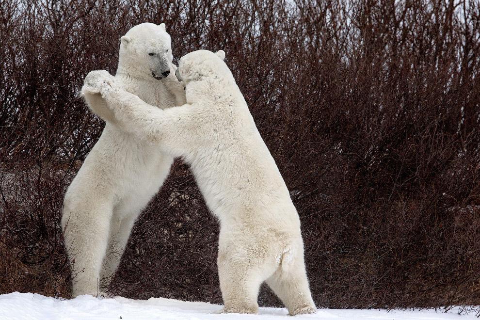 Білий танець