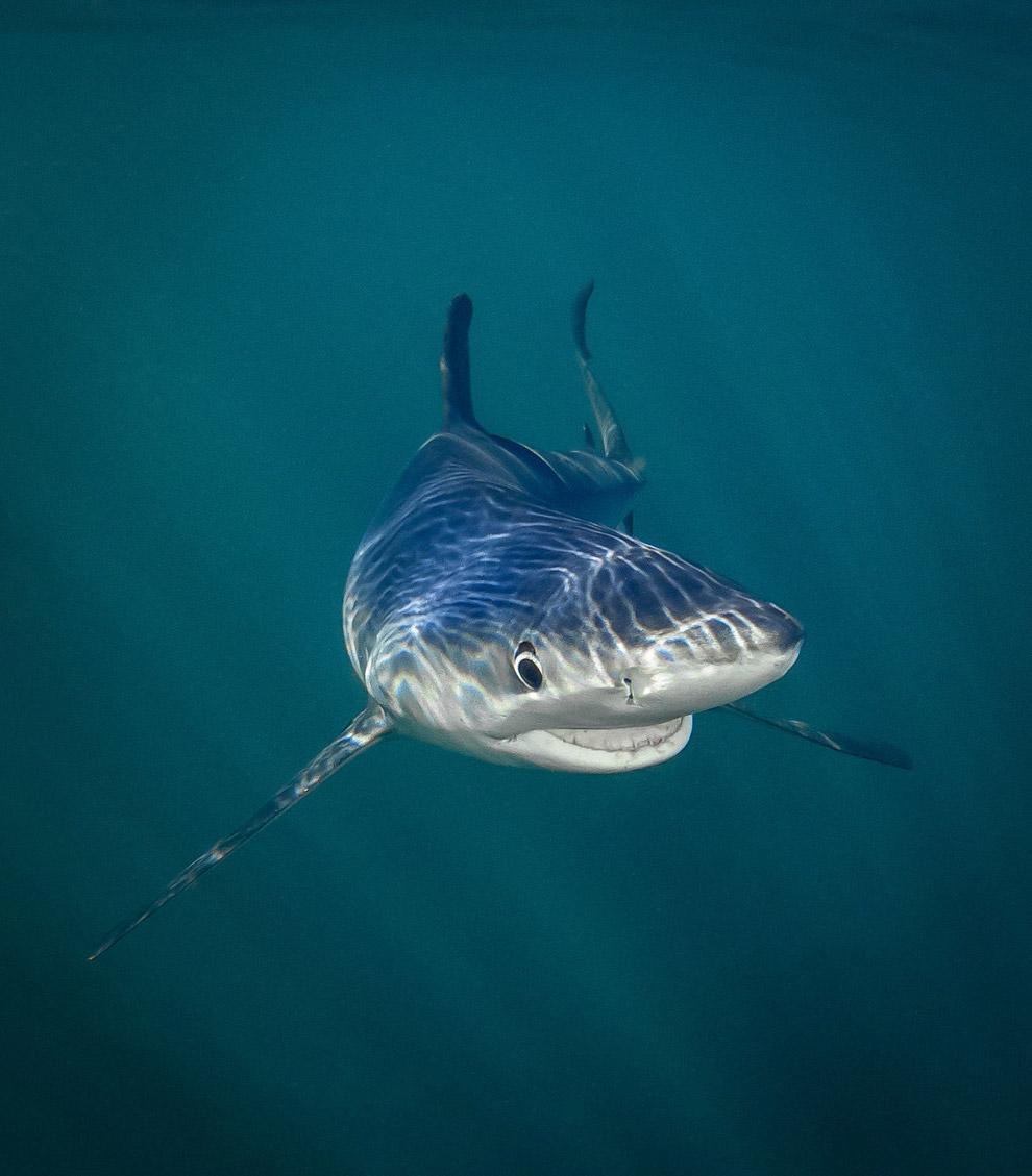 Весела акула