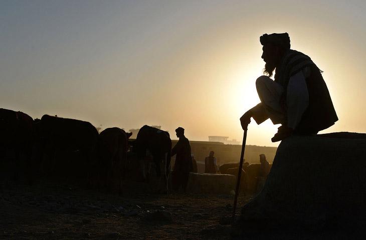 Афганистан погибшего фотографа